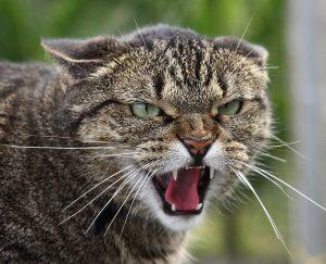 кот укусил, опухла рука