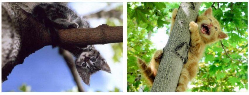 как снять котенка с дерева