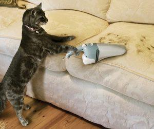 что делать, если кошка линяет