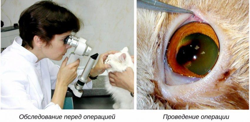 хирургическое лечение глазной патологии