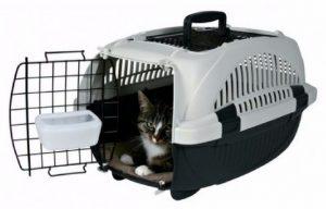 как поймать домашнюю кошку