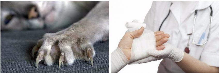 что делать при порезах и укусах животного