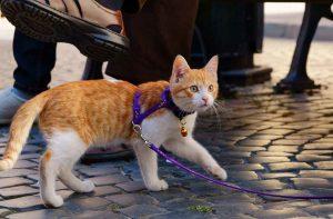 подготовка кошки к поездке