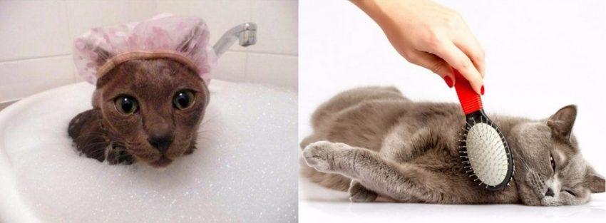 подготавливаем кошку