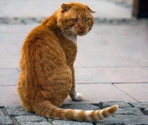 отличия уличного кота от домашнего