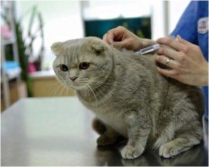 меры предосторожности при укусах кошек