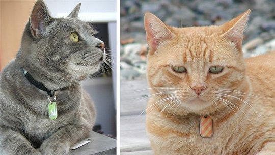 как найти хозяина кошки