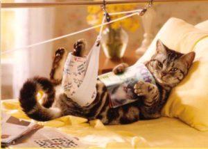 как правильно проводить обработку ран у животного