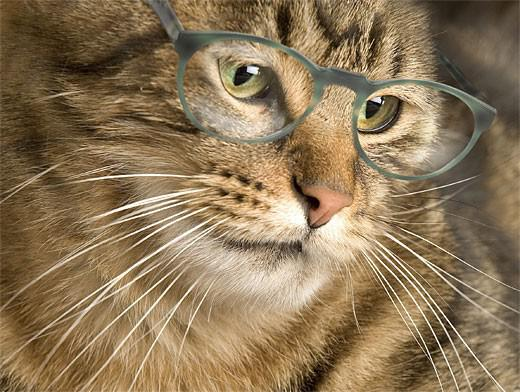 сколько кошке лет?