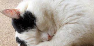 причины смерти кошек