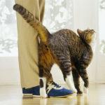 травмы у кошек после драк