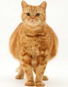 когда нельзя ставить клизму кошке
