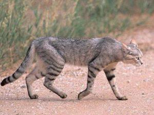 причину худобы у кошек