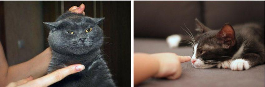 воспитание кошек