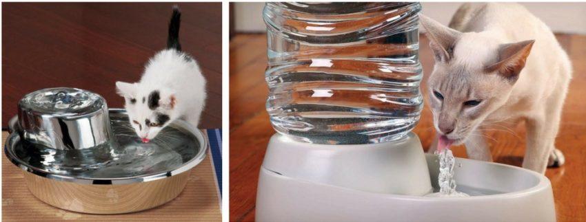 кот не пьет воду что делать