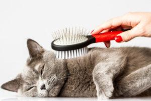 профилактика запоров у кота