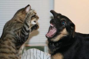 раны после драк с собаками
