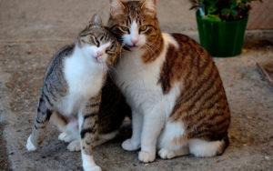 кошка нашла себе кота на улице