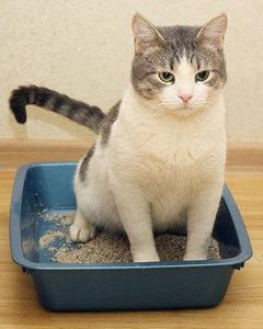 когда коту следует делать клизму