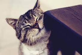 почему кошка трется о мебель
