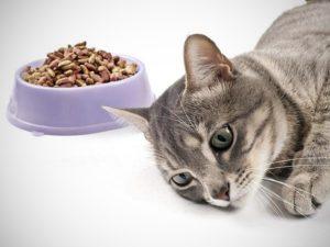 причины похудения у кота