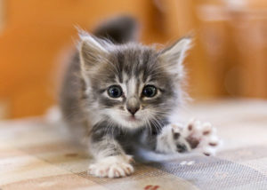 причины кусаний и царапаний котенка