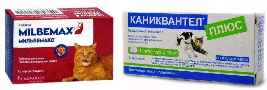 лечение кашля у кошек