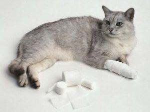 как правильно обрабатывать раневую поверхность кошке