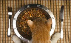 рациональное питание кошки после тяжелой раны