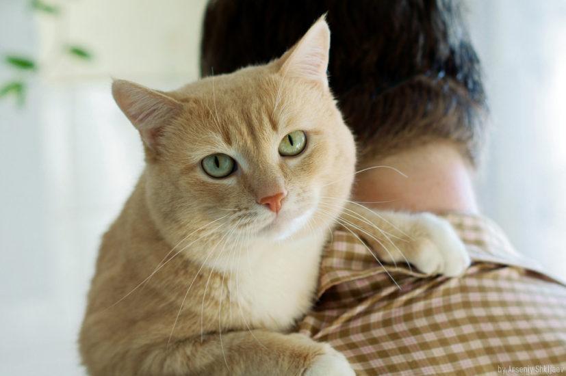 молочный шаг у кошки