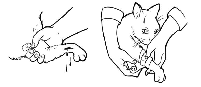 как наложить бинтовую повязку кошке