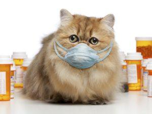 что делать, чтобы у кошки не появлялся кашель