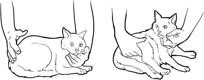 как подсчитать пульс у кошки