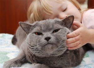 когда гладить строптивую кошку