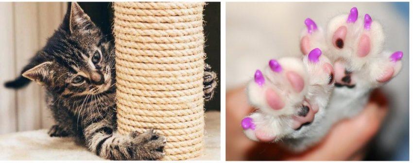 что делать, чтобы кошка не дерла мебель