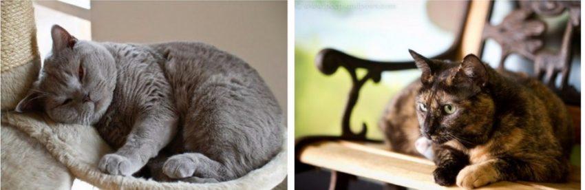 как умирают коты