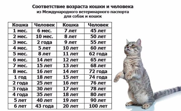 как посчитать возраст кошки