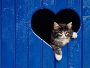 заболевания сердца у кошек