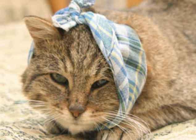 симптомы отита у кошек