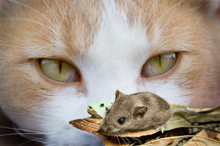 как избавить кошку от глистов