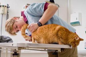 диагностика глистов у кошки