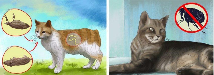сырое мясо и клещ - основные причины глистов у кошек