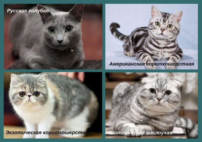 как выбрать себе кошку