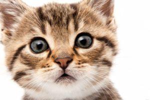 признаки здорового котенка