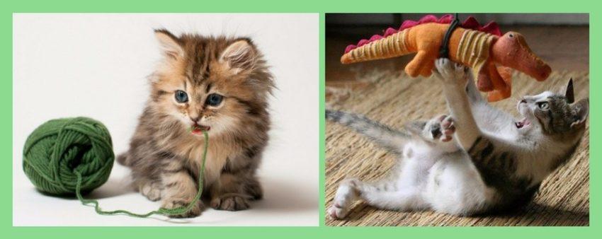 на что обращать внимание при выборе котенка