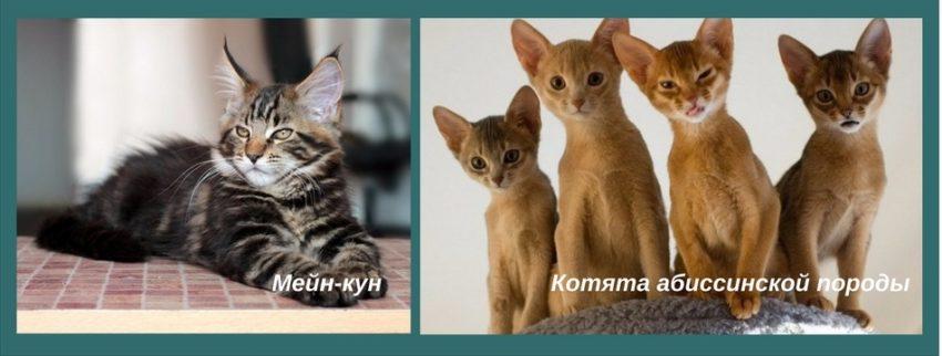 как выбрать котенка ребенку