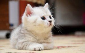 ка выбрать себе котенка