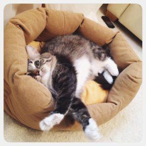 лечение пневмонии у кошки