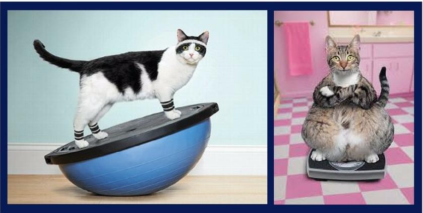 физическая активность и контроль веса у кошки