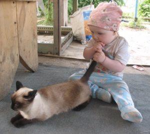 причины перломов хвоста у кошек